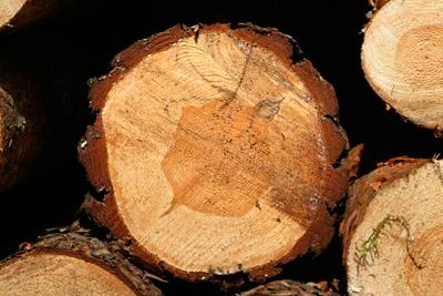 Suszenie drewna - meblarstwo